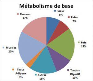 métabolisme de base