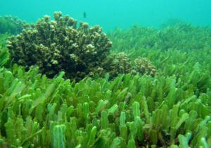 Read more about the article La Chlorella: une algue pleine de surprises