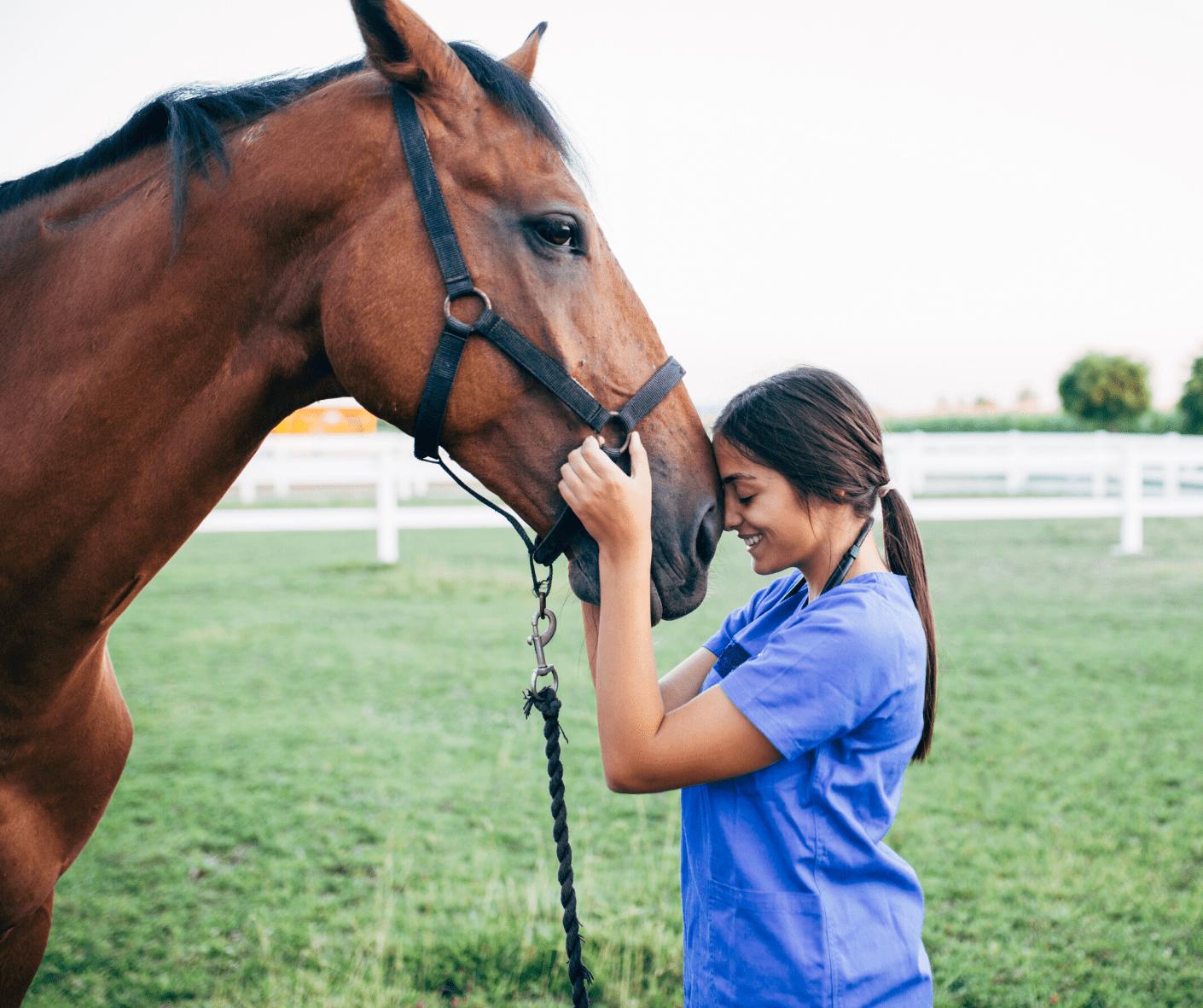 spiruline pour les chevaux