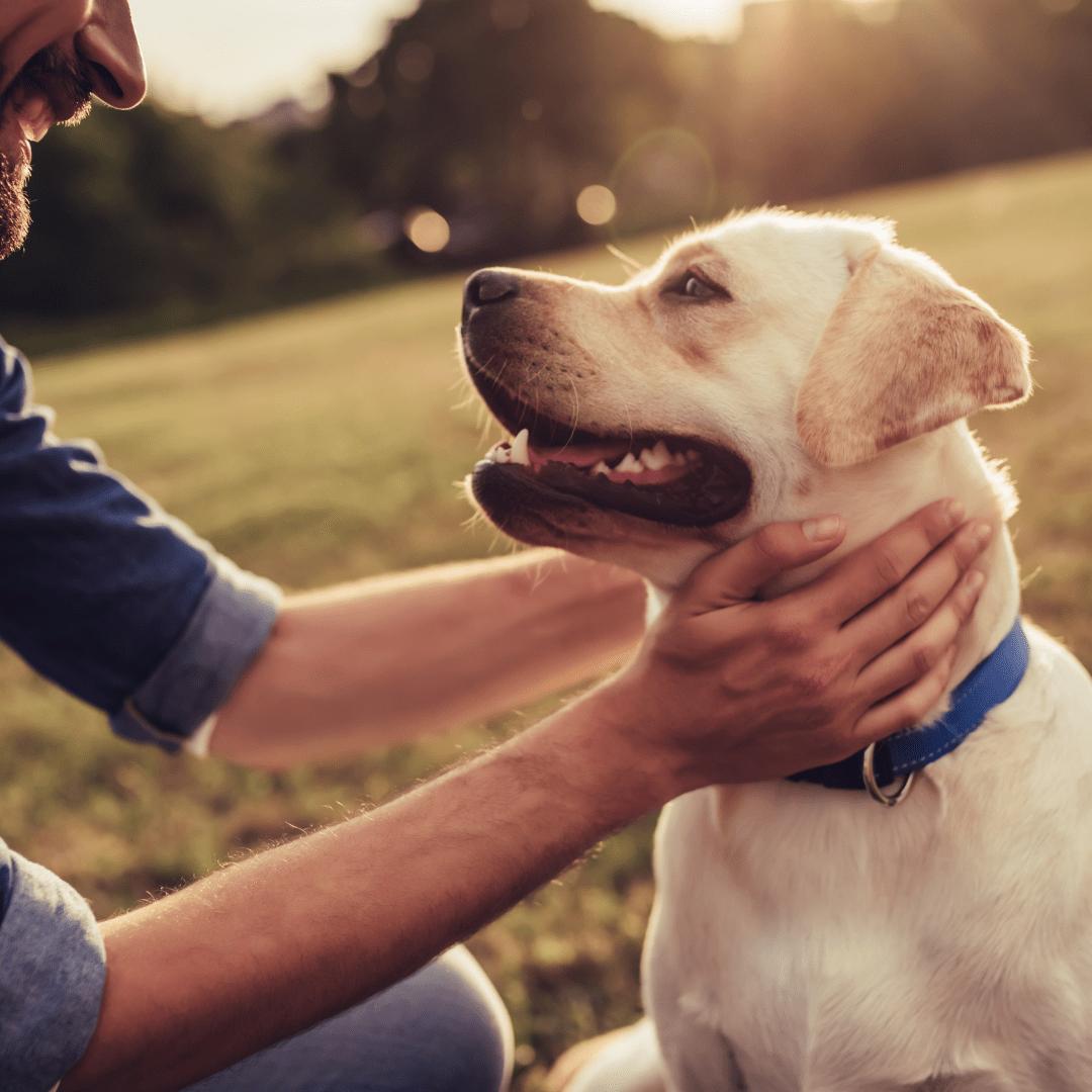 spiruline pour les chiens
