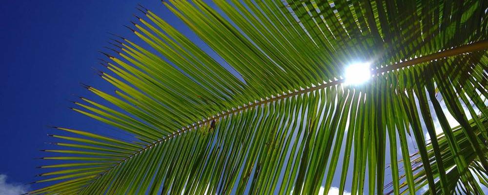 Sélection Hiver austral